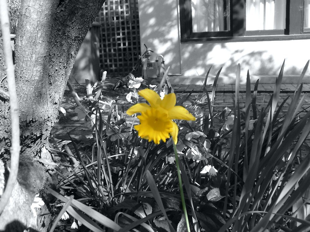 one yellow flower in lonely world by Jamie Thomas
