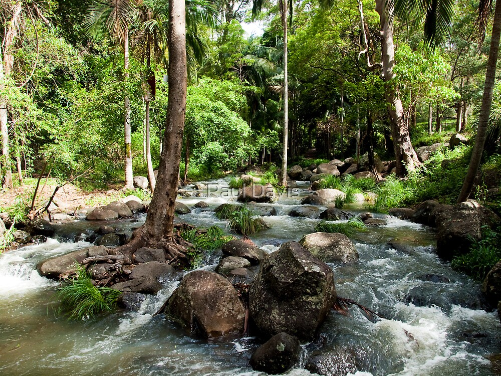 Cedar Creek - Tamborine Mountain Caravan and Camping - Gold Coast - Queensland by Paul Davis
