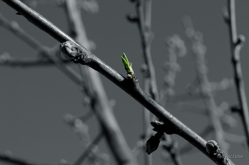 New Beginnings by Novacrime