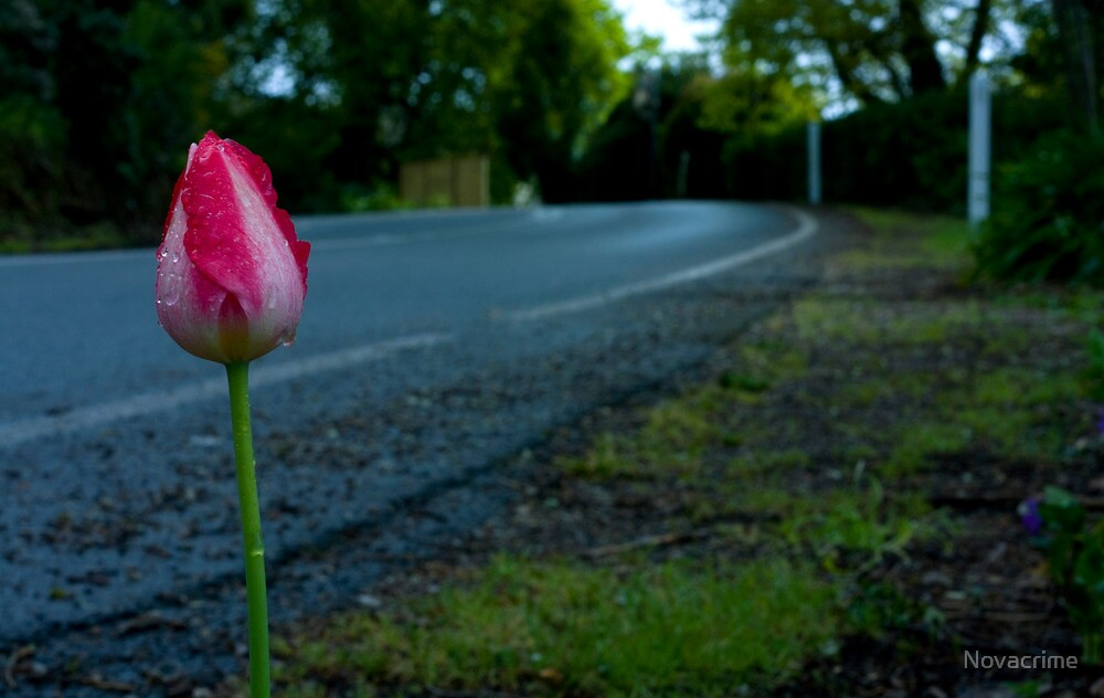 Tulip Road by Novacrime