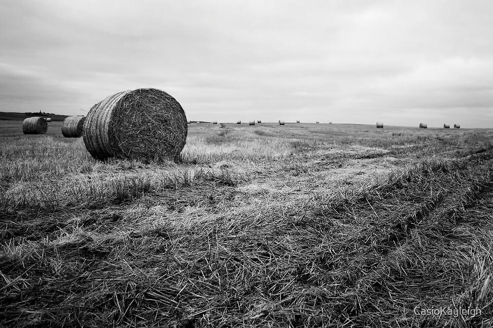 Fields of Hay Near Slains Castle by CasioKayleigh