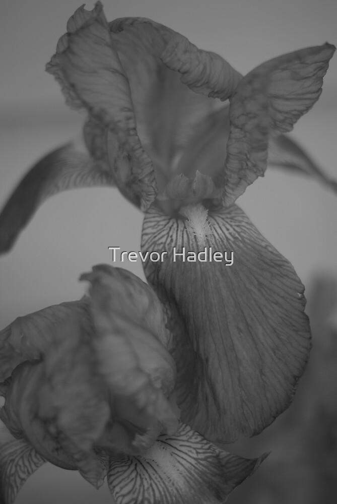 Light as a feather by Trevor Hadley