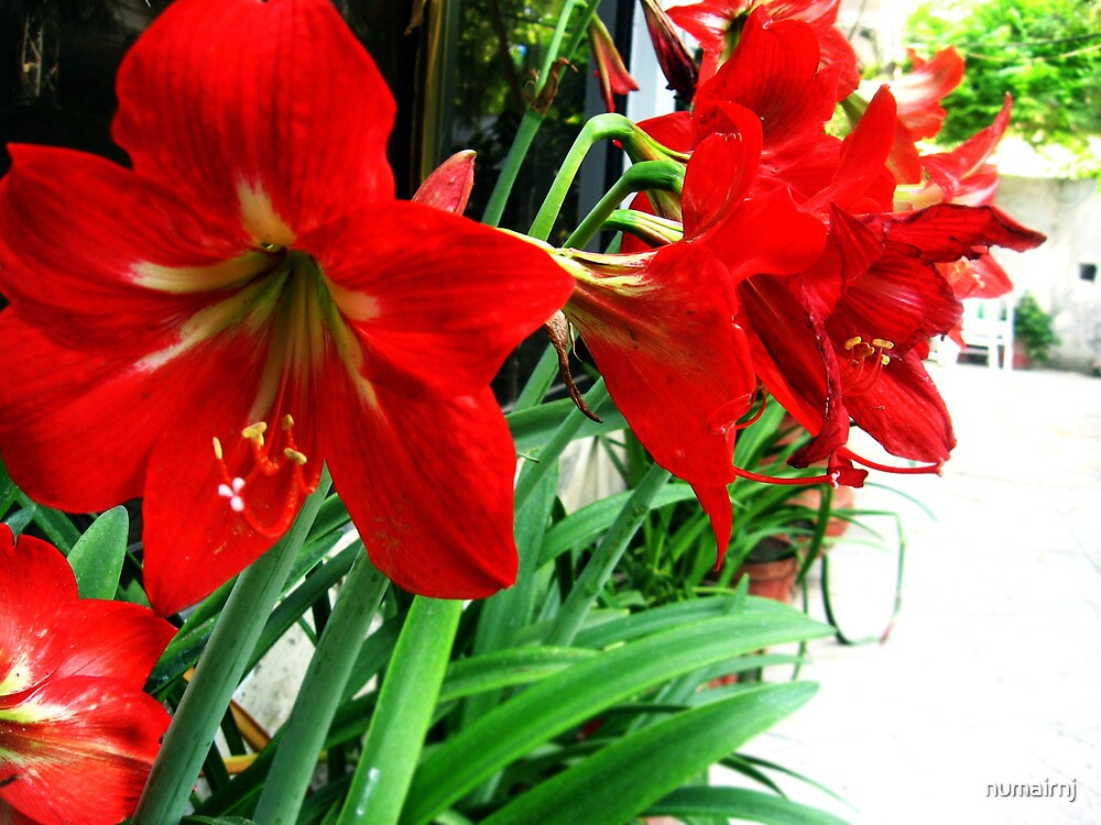 Flowers Close up by numairnj