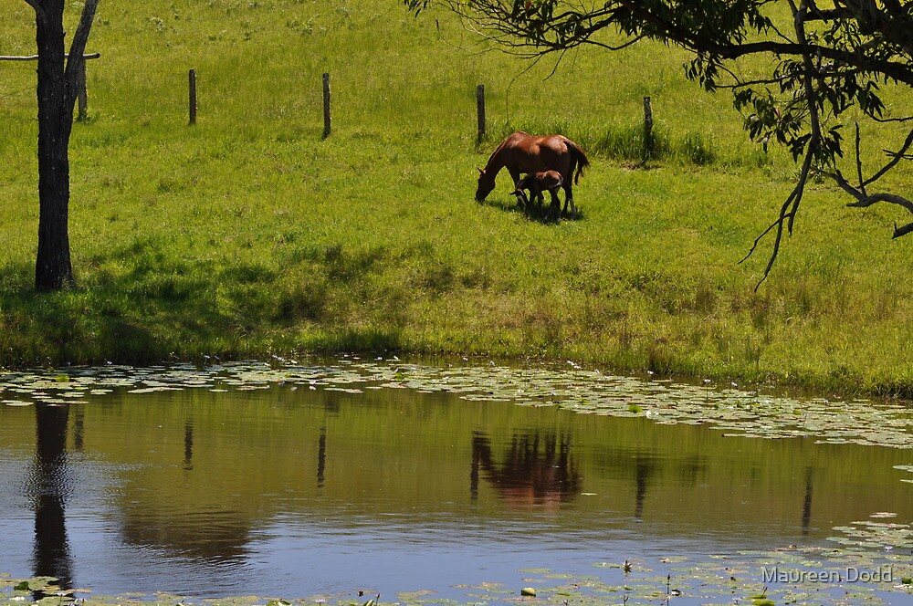 Horse Reflections in a Dam. by Maureen Dodd