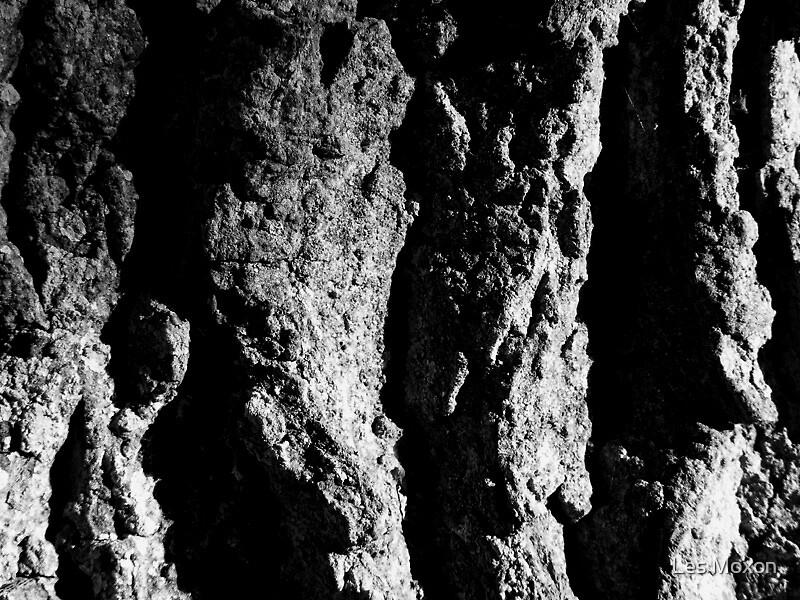 Oak Bark by Les Moxon