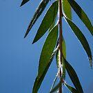leafy green by Alihogg