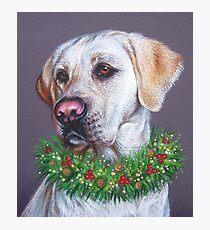 Christmas Lab Photographic Print