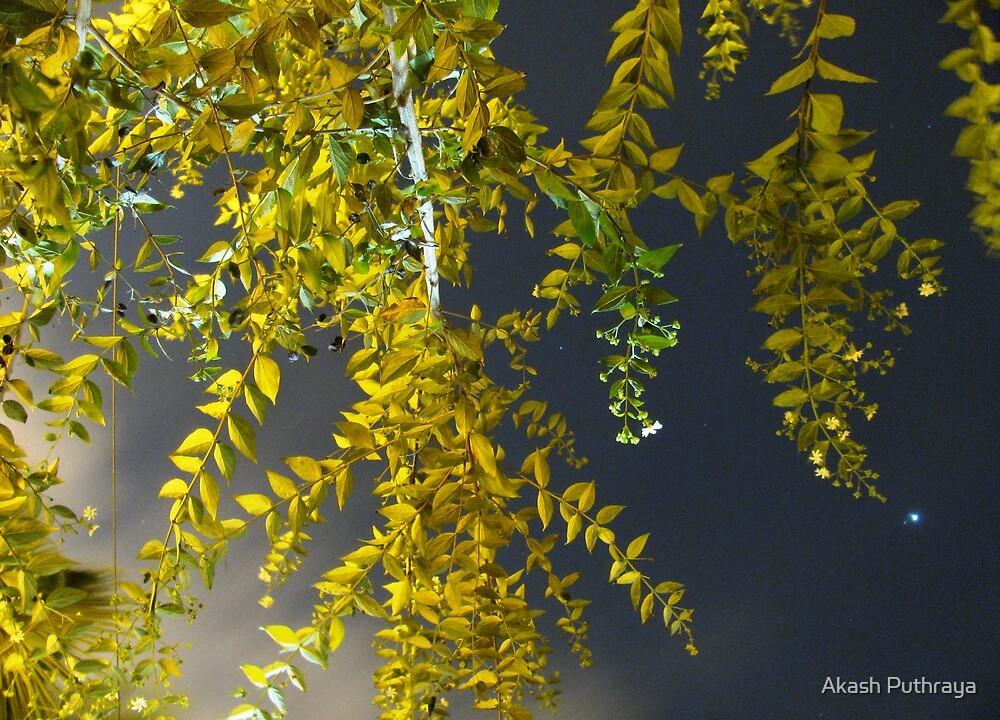 Branching into Stardom by Akash Puthraya
