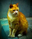 Street Cat in Istanbul by Kutay Photography