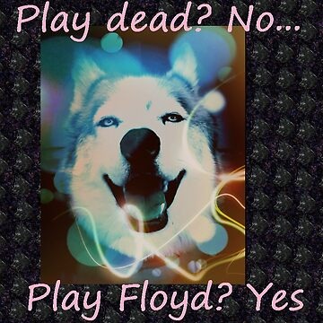 Play dead, no... play Floyd by HuskyMama