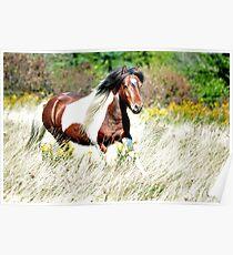 Pippin - Grayson Highlands Pony Stallion Poster