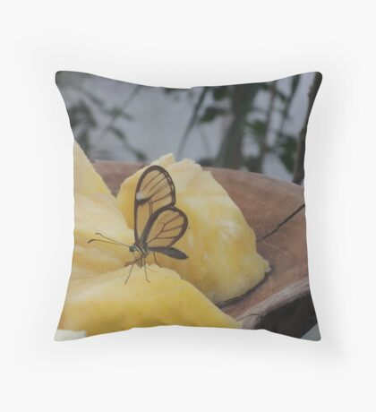 Transparency is a Wonderful Thing Throw Pillow