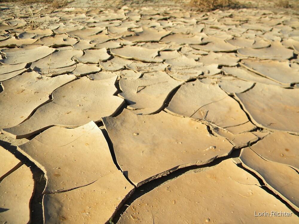 dry beautiful desert by Lorin Richter