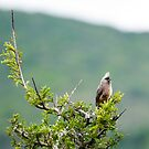 Unknown South African Bird  by jonwhitehead