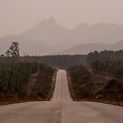 Tsitsikamma Road by jonwhitehead