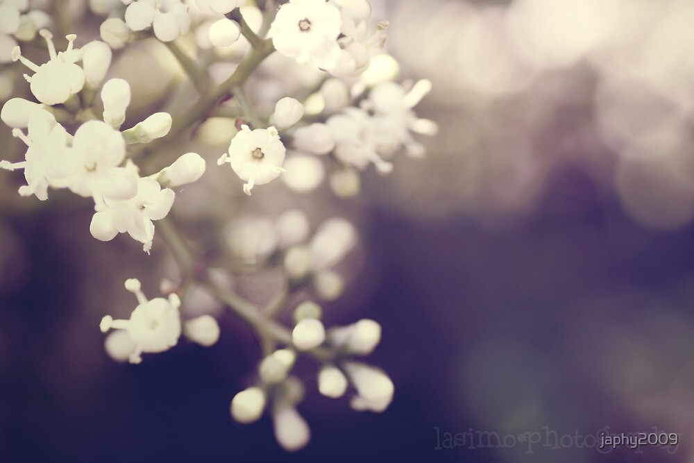 white light on spring by japhy2009