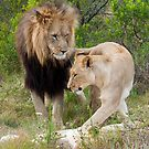 Lion and Lioness by jonwhitehead