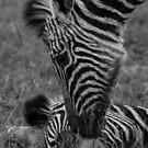 Nuzzling baby by jonwhitehead