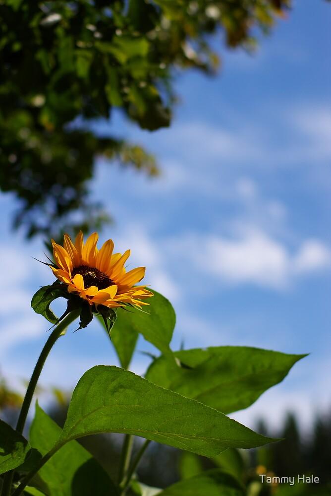 sunflower by Tammy Hale