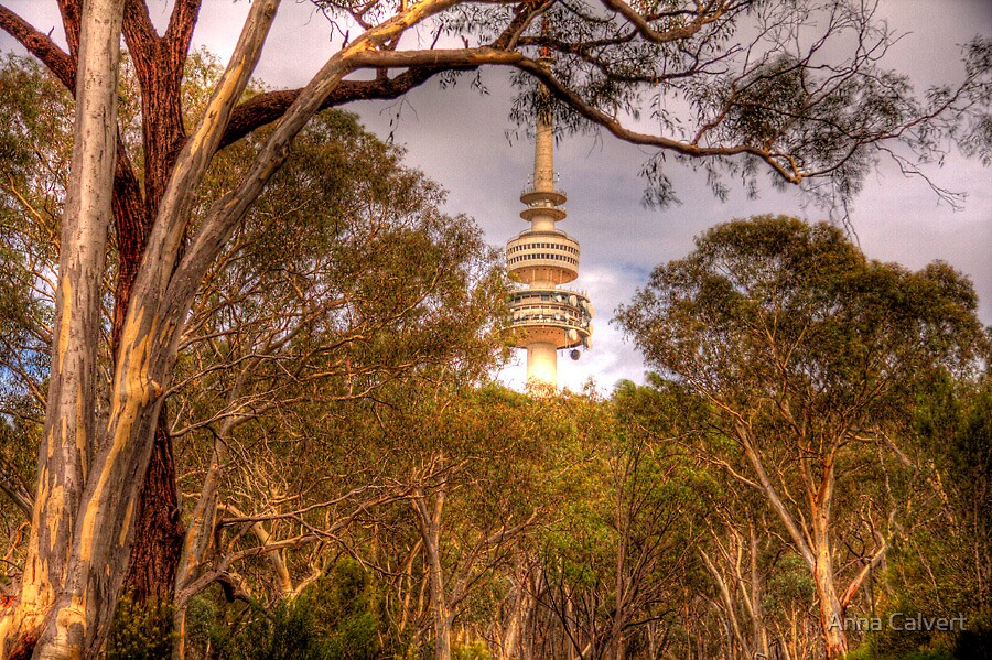 Telstra Tower through the trees Canberra (HDR) by Anna Calvert