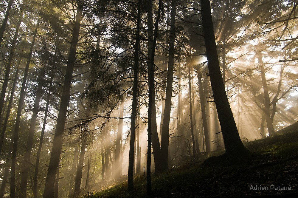 Forested Sunlight & Mountain Mist by Adrien Patané
