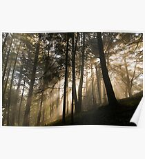 Forested Sunlight & Mountain Mist Poster