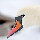 Inquisitive Swan   3938 by pogomcl