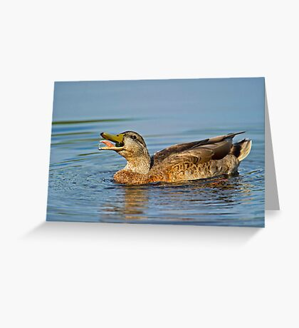 Feeding Duck Greeting Card