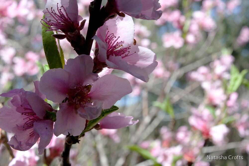 Spring Time Blossoms by Natasha Crofts