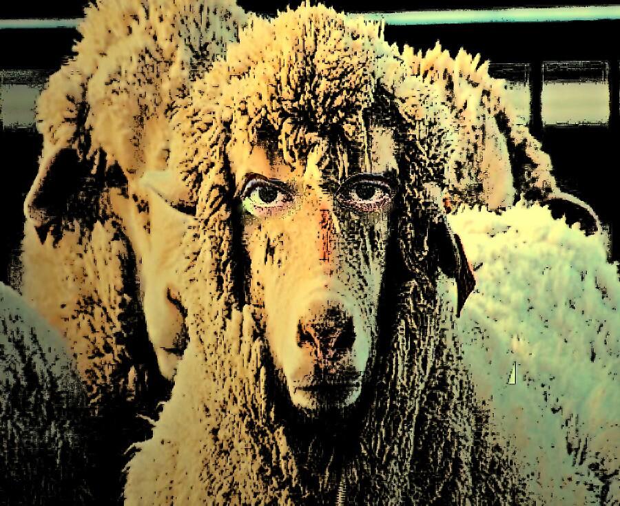 Sheeple  by mdel747