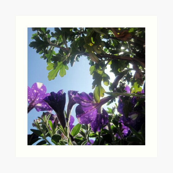 Starry Sky Flowers 17 Art Print