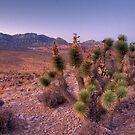 Settling Desert Dusk by Clayhaus