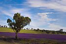 Postcard from Junee by Rosalie Dale