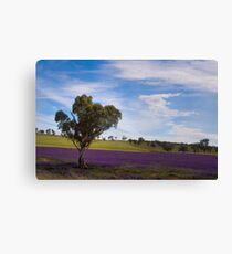 Postcard from Junee Canvas Print