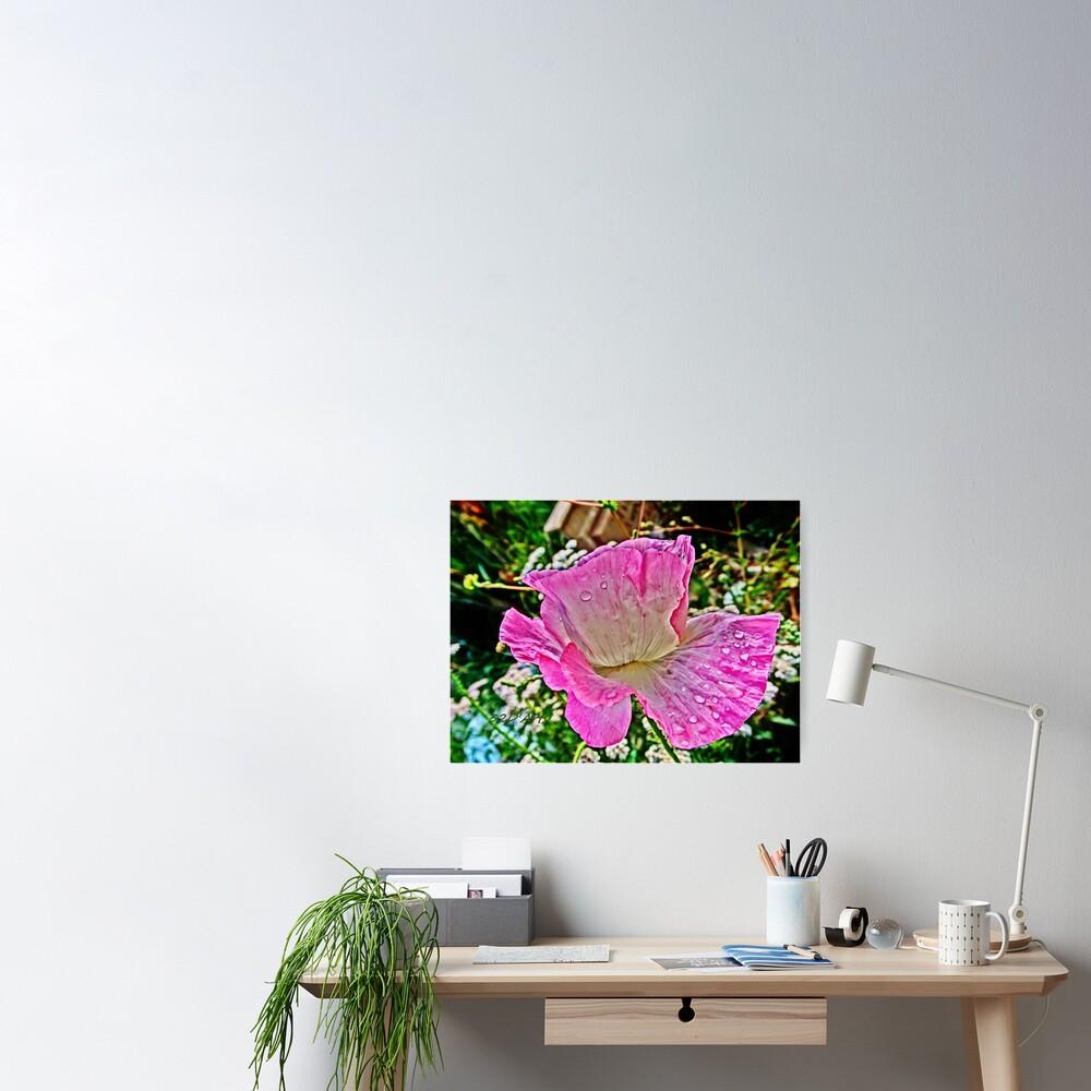 Drippy Pink Poppy Poster