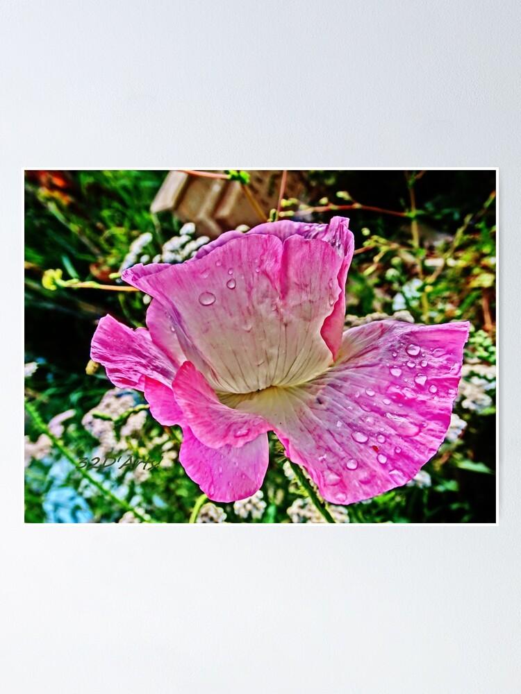 Alternate view of Drippy Pink Poppy Poster