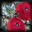 Ruby red poppies by sue mochrie