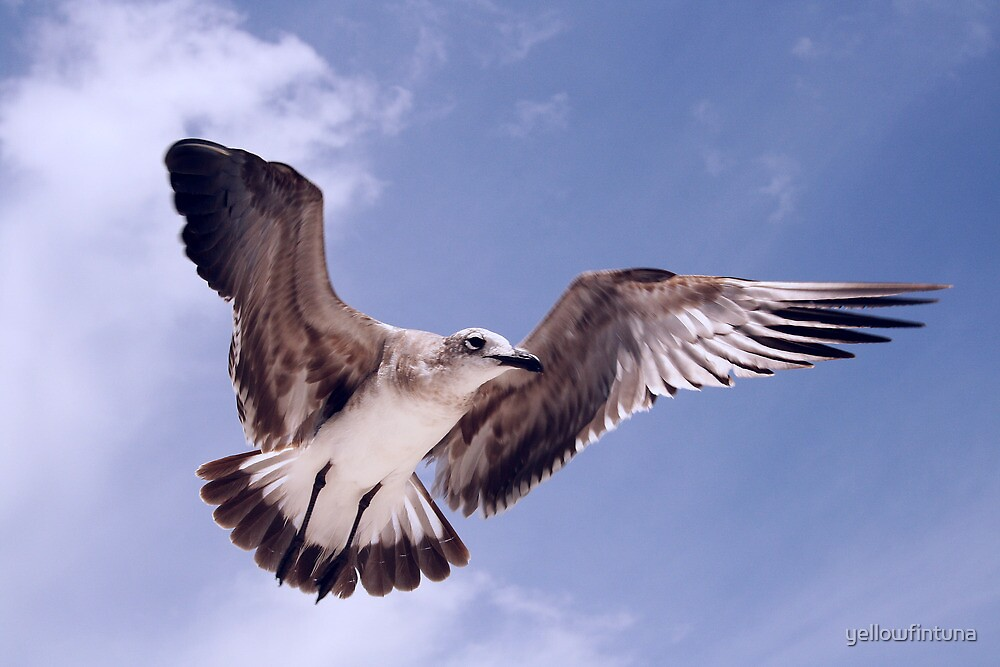 SeaGull Above! by yellowfintuna
