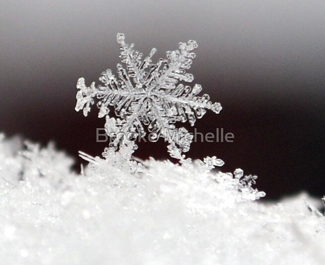 Snowflake  by Brooke Michelle