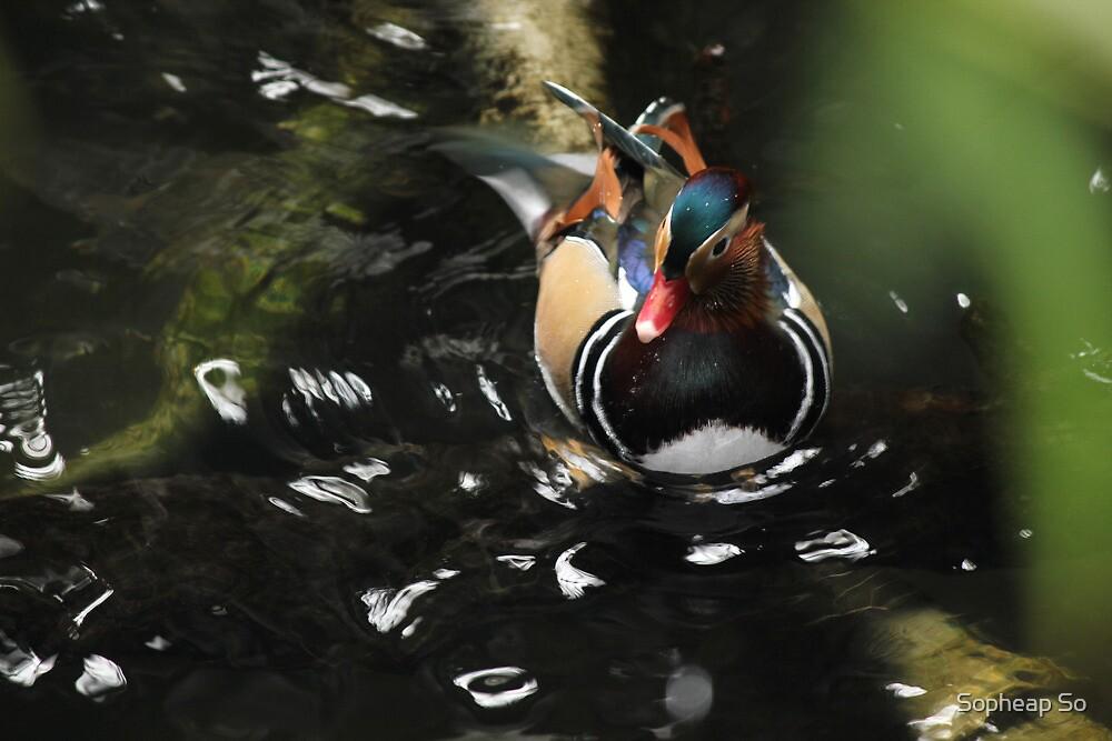 Duck..Duck..Goose by Sopheap So