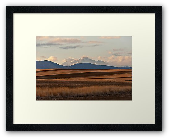 Wheat Fields and Longs Peak by Gregory J Summers