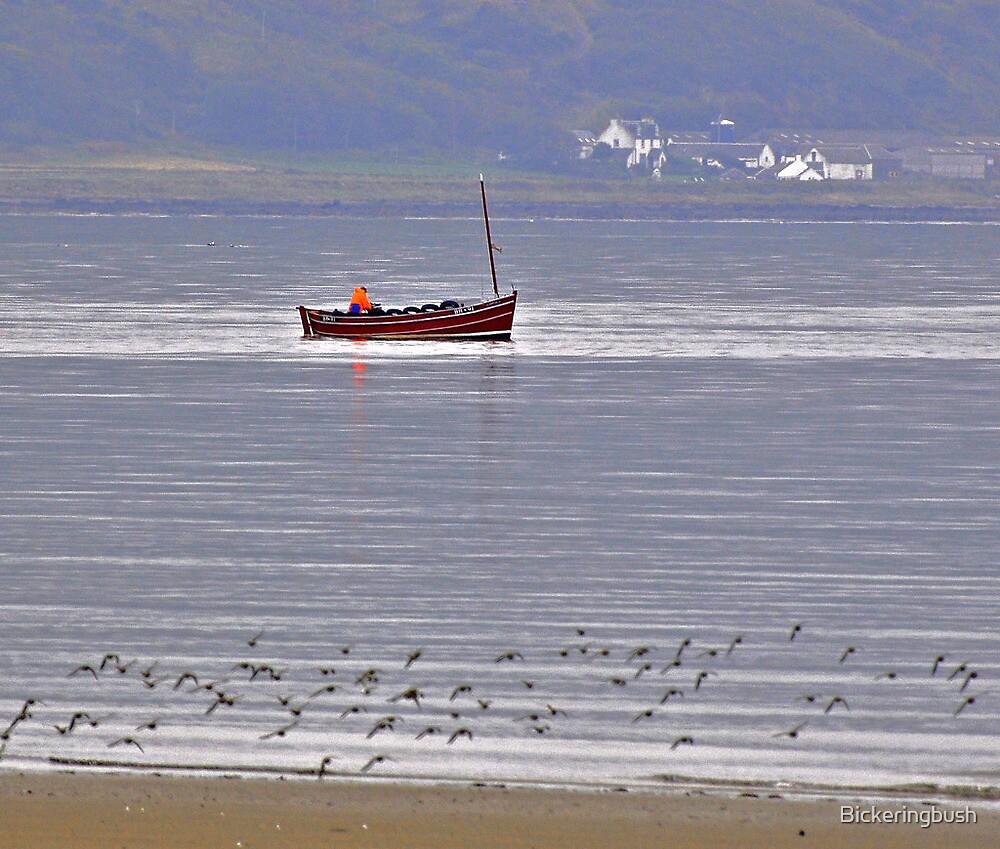 Chasing the Gulls by Bickeringbush