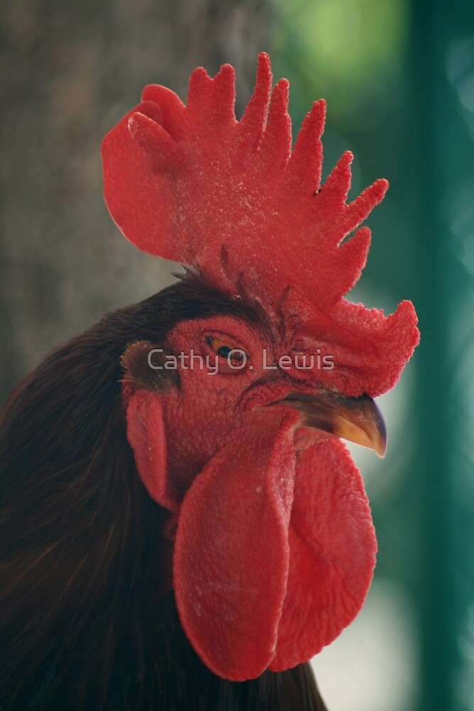 Rooster by Cathy O. Lewis