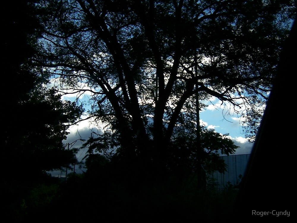 Sunrise through the trees by Roger-Cyndy