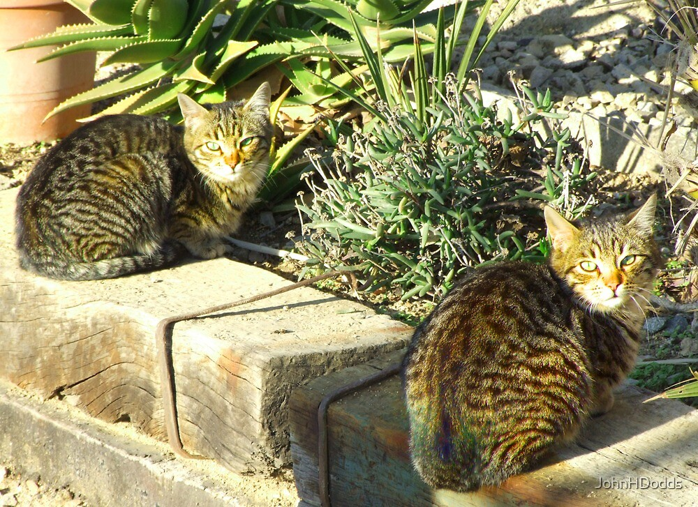 ferral cats,barcelona by JohnHDodds