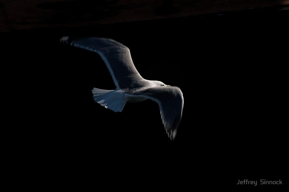 Soar by Jeffrey  Sinnock