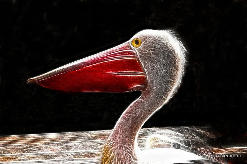 Pelican Fractal by Tom Newman