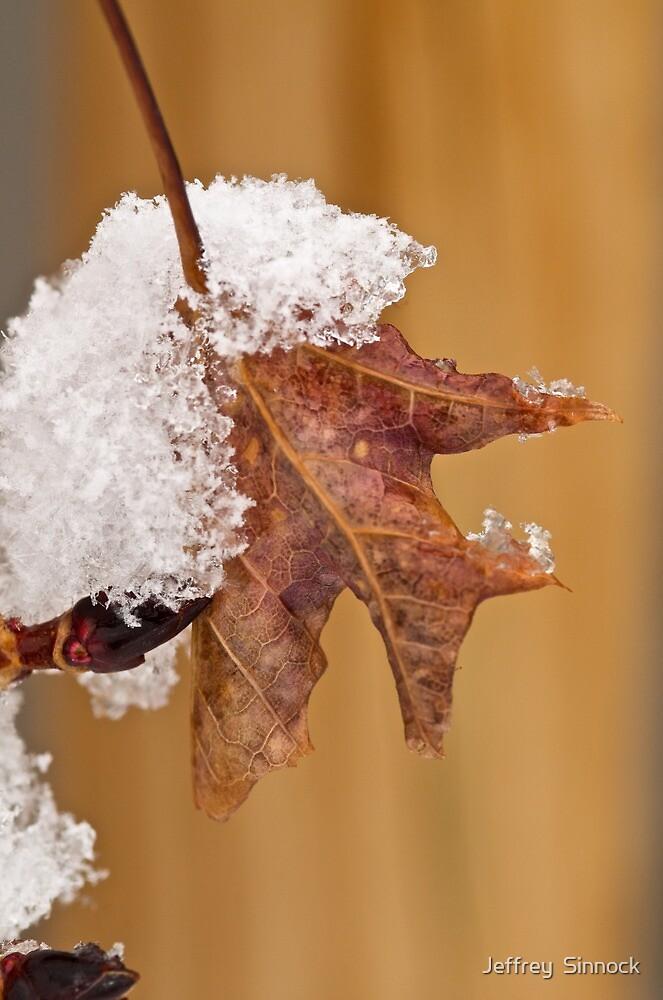 Winters first snow by Jeffrey  Sinnock