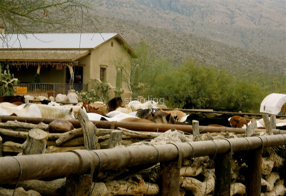 GUEST RANCH IN THE RINCON MOUNTAINS by starrling