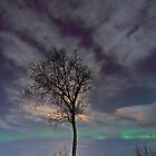 The tree by the arctic shore by Frank Olsen